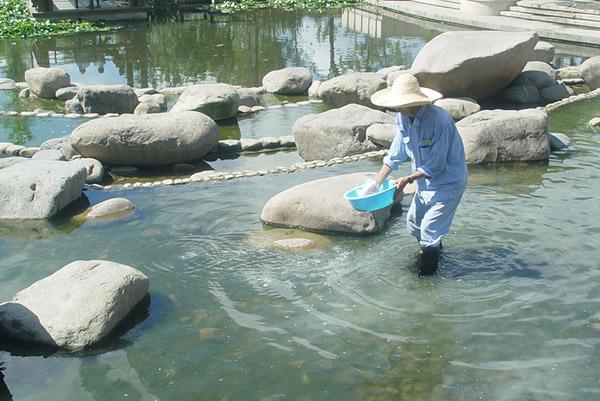 水生态治理