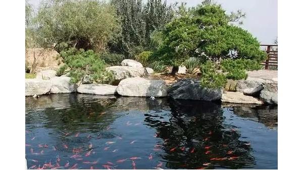 良好的水生态系统特征有哪些