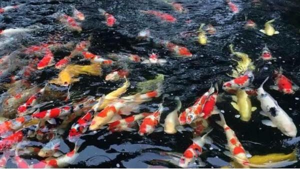 更换鱼池过滤材料需要注意什么