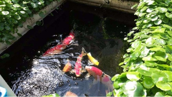 鱼池的过滤方法有哪些