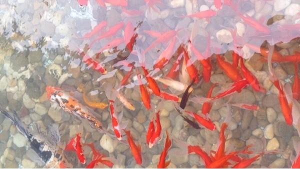 生活中安装鱼池过滤系统的必要性是什么