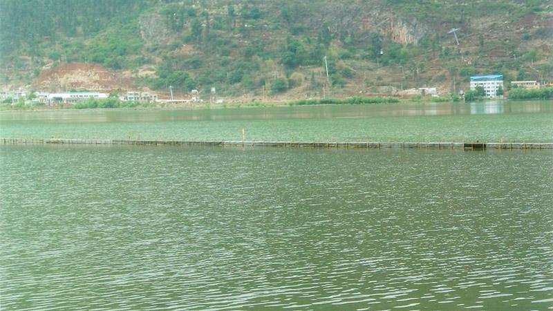 泓宝复合微生菌为滇池清污