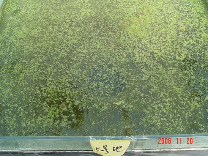 泓宝-泼洒肥水菌的试验池