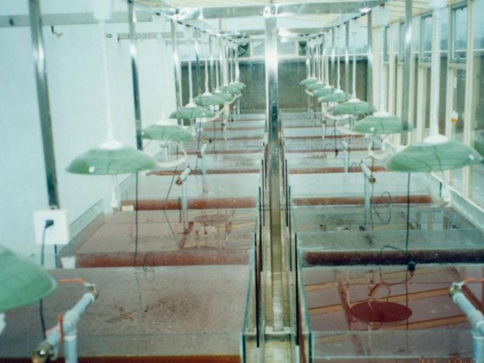 泓宝-光合细菌生产车间