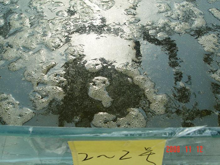 泓宝-泼洒遮阳菌的实验池
