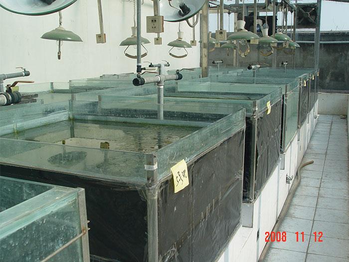 肥水菌培藻试验