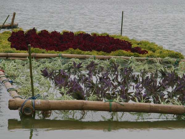 紫罗兰和吊兰